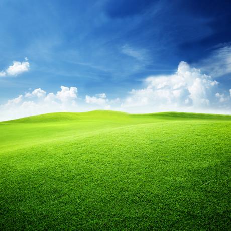 Fertilisant et engrais gazon wbrown toujours plus que for Recherche tonte de pelouse